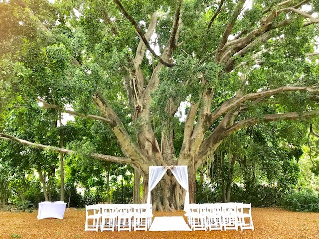 Morning Star Lawn City Botanic Gardens Wedding
