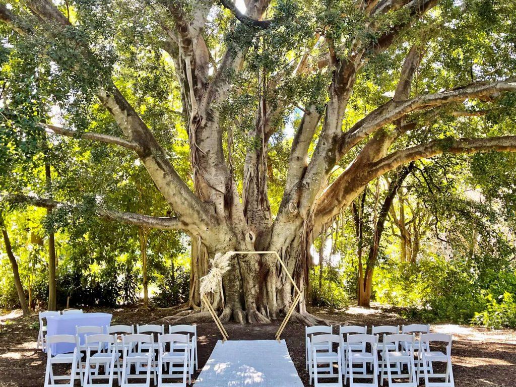 Palm Avenue Lawn City Botanic weddings
